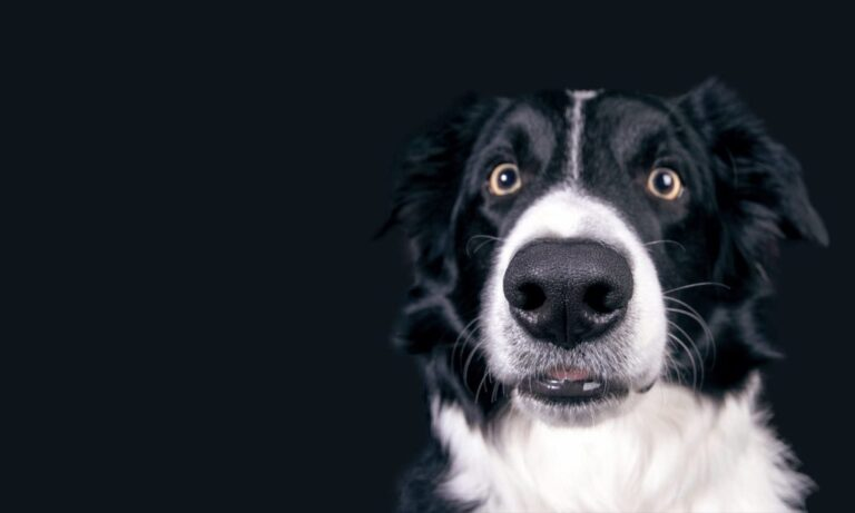 Helping Pets (NE) Charity